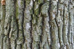 corteccia di albero con muschio