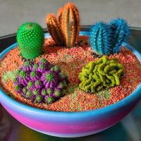 bellissimo terrario colorato con piante grasse