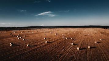 campo di erba marrone sotto il cielo blu durante il giorno foto