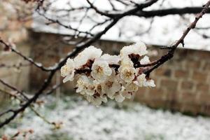 fiori congelati
