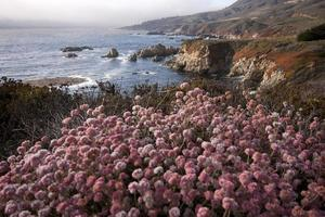 grano saraceno rosa e big sur coast