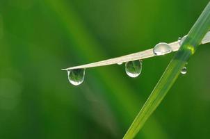 goccia d'acqua sul filo d'erba al mattino