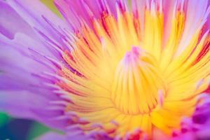 immagine di un fiore di loto sull'acqua