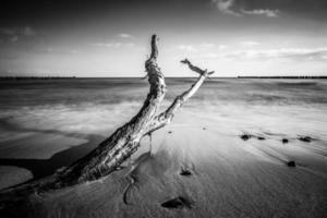 tronco sulla riva del mar baltico foto