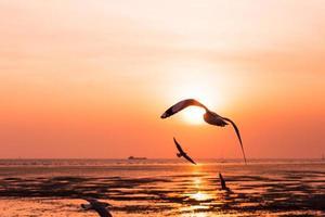 uccelli gabbiano che volano nel tramonto sul mare