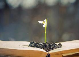 fiore di primavera in libro aperto