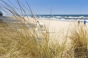 duna con erba spiaggia in primo piano. mare Baltico. foto