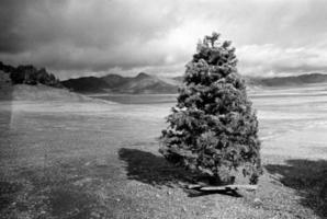 scappatella all'albero di Natale foto
