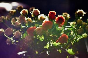 bouquet di rose foto