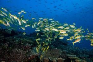 all'interno di un banco di pesci sott'acqua