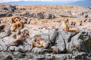 animali sul canale beagle, tierra del fuego foto