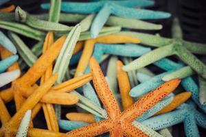 souvenir di stelle marine e conchiglie in vendita foto