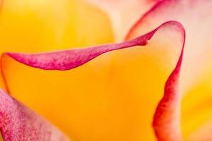 rose nel roseto