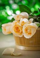 rosa romantica