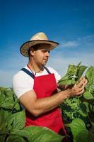 contadino nel suo campo di girasoli foto