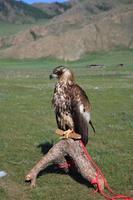 parco nazionale di terkiin tsagaan nuur foto