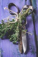 timo e forbici sulla tavola di legno viola foto