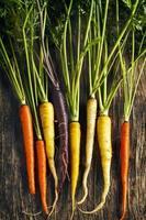 carote fresche organiche di cimelio