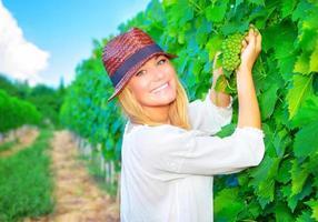 donna che lavora sul campo di uva foto