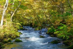 autunno della gola di oirase ad aomori, in giappone