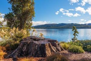 lago te anau con grande ceppo di albero, fiordland, new zealamd