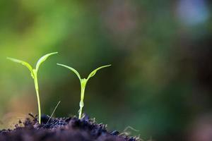 vicino la germogliazione di piante in natura