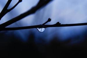 ramo dell'albero dopo la pioggia