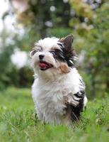 cucciolo foto