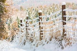 recinzione congelata