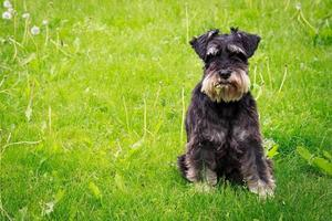 carino cane da masticare su un congedo di erba.