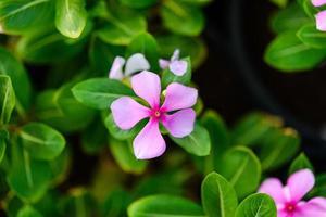 vari fiori tropicali. sfondo colorato nel giardino dei miracoli di dubai.