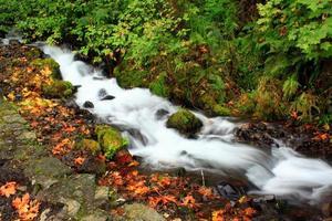 fiume di montagna in autunno
