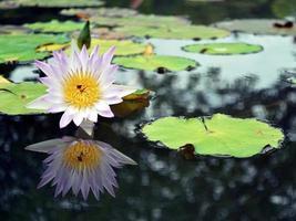 specchio di loto