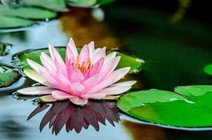 loto rosa