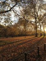 parco d'autunno