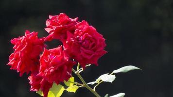 fiori autunnali foto