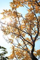 albero d'autunno