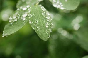gocce di pioggia sulle foglie verdi