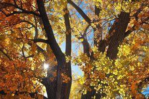 autunno splendido