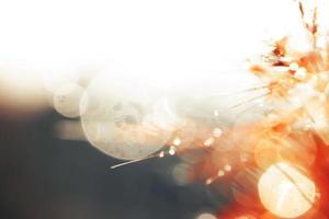 sfocatura e messa a fuoco morbida di fiori di erba con gocce d'acqua