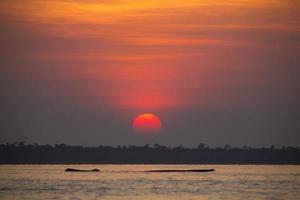 tramonto e albero morto galleggiante sul lago maracaibo
