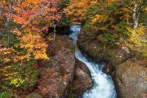 cascata con foglie d'autunno in giappone foto