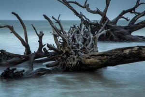 spiaggia di legni (1) foto