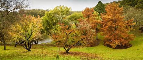 alberi autunnali nel parco