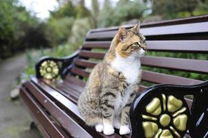 gatto soriano foto