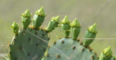 fiori di cactus in riva al mare nazionale di padre