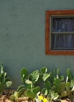 cactus davanti a un muro e una finestra