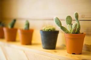 cactus in piccoli vasi di fiori foto