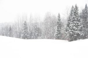 abeti balsalm nella neve pesante