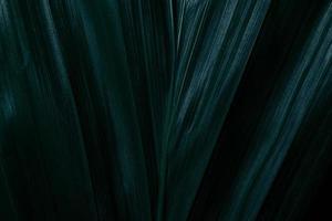 foglie verdi, sfondo scuro